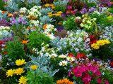 cara-membuat-taman-bunga