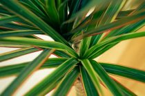 cara-menanam-bambu-rejeki