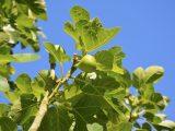 cara-menanam-pohon-tin