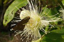 cara-mengatasi-bunga-rontok