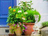 cara-menjaga-tanaman