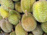 ciri-ciri-buah-durian-montong