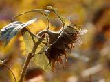ciri-ciri-tanaman-terserang-nematoda