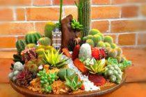jenis-jenis-kaktus-unik