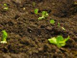 jenis-jenis-tanah