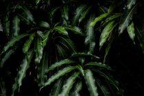 kelebihan-kekurangan-mencangkok-tumbuhan