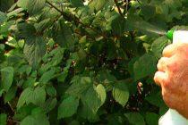 macam-macam-fungisida-tanaman