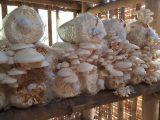 membuat-baglog-jamur-tiram