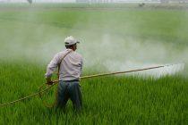 membuat-pestisida-organik