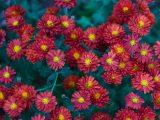 mengatasi-bunga-gampang-rontok