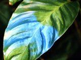 menyembuhkan-penyakit-bercak-daun
