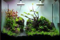 tanaman-aquascape-tumbuh-subur