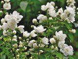 tips-agar-tanaman-berbunga-lebat