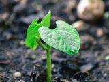 zat-pengatur-tumbuh-tanaman